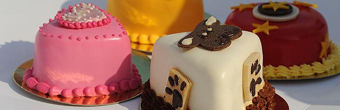 Сергей Лазарев накормит собак и кошек тортами